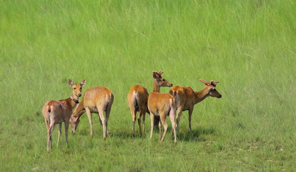 Bardiya Jungle Safari - 3 nights 4 days