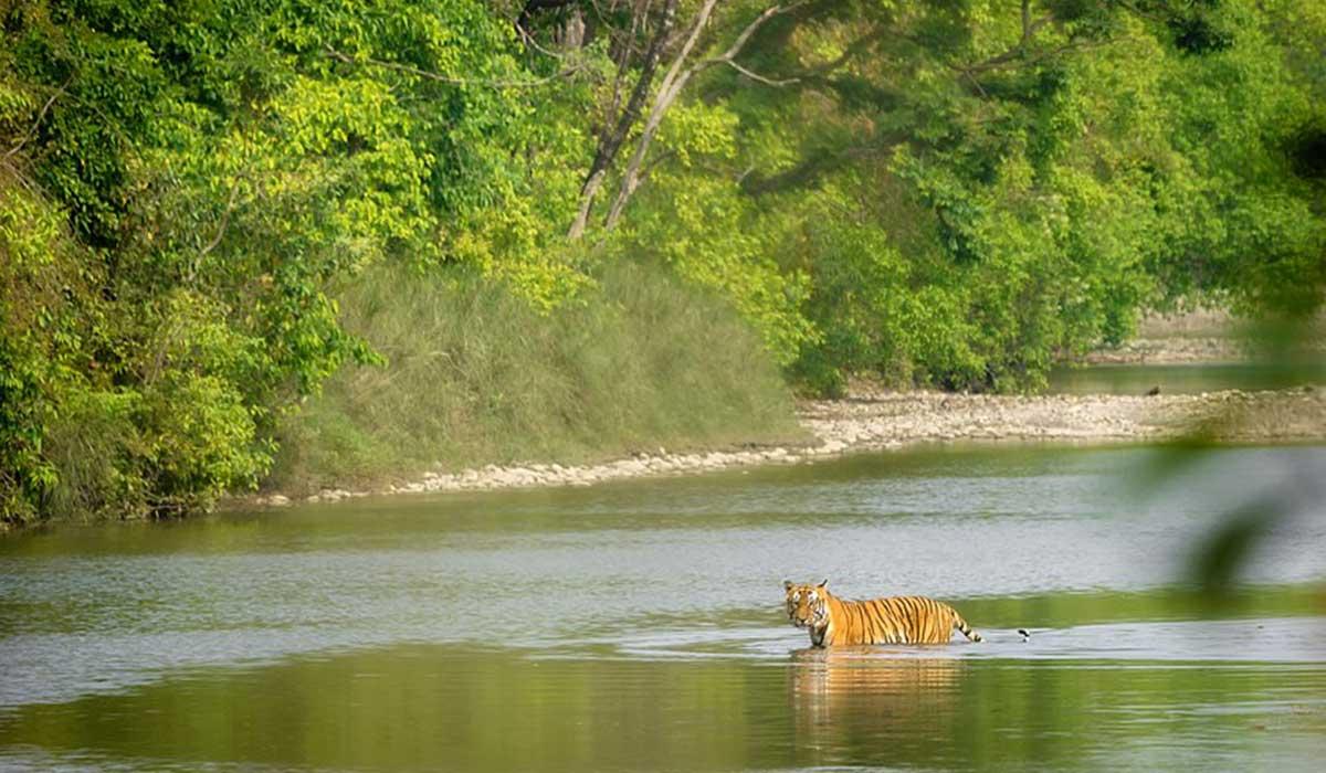 Bardiya Jungle Safari - 3 nights 4 days