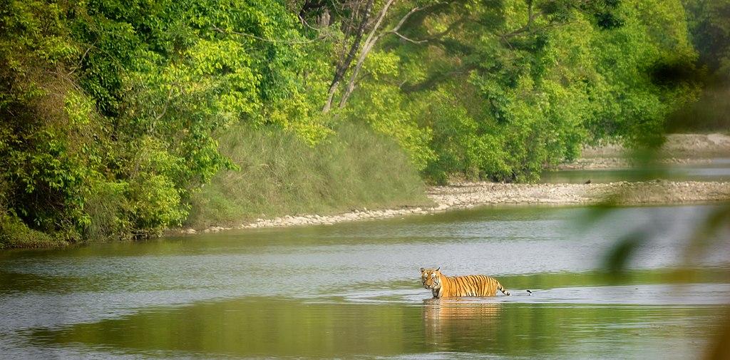 Bengal tiger Car Hire Kathmandu to Chitwan